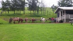 Pferde und Guides warten schon