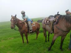 braaaaaaves Pferd